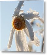 Frosty Flower Metal Print