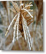 Frosty Fountain Grass Metal Print