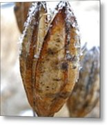 Frosty Tiger Lily Seed Pod Metal Print