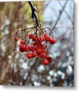 Frozen Mountain Ash Berries Metal Print