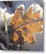 Frozen Oak Leaf Metal Print