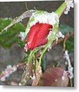 Frozen Rosebud Metal Print