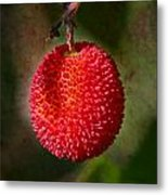 Fruit Of Strawberry Tree Metal Print