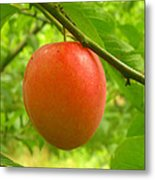 Fruit Plums Red Metal Print