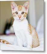 Fuji Kitten Metal Print