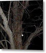 Full Moon Beyond The Old Tree Metal Print