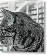 Full Profile Of The Cat - Black-and-white Metal Print