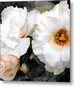 Full White Roses Metal Print