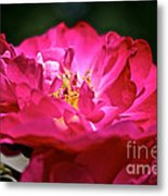 Fully Open Metal Print
