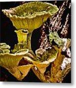Fungus Among Us Metal Print by Michael Putnam