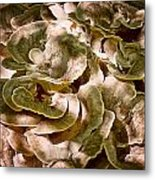Fungus Swirl Metal Print by Michael Putnam