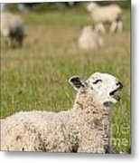 Funny Sheep Metal Print