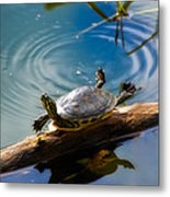 Funny Turtle Catching Some Rays Metal Print