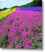 Furano Lavender Season Metal Print