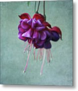 Fuschia Flower Metal Print