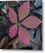 Fushia Leaf Metal Print