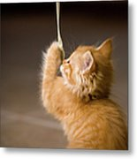 Fuzzy Baby Kitten Playing And Pulling On A Cord Metal Print