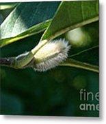 Fuzzy Magnolia Metal Print