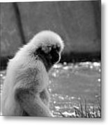 Fuzzy Monkey 002 Metal Print