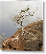Galapagos Tree Metal Print