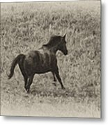 Galloping Horse Metal Print