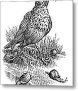 Garden Bird Catching Snails, Artwork Metal Print by Bill Sanderson