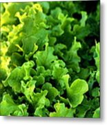 Garden Fresh Salad Bowl Lettuce Metal Print
