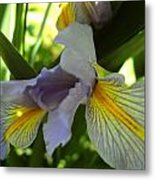 Garden Iris Metal Print