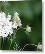 Garden Lace Group By Jammer Metal Print