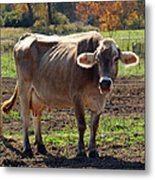 Gasping Cow Metal Print