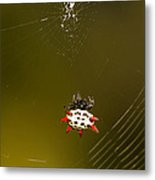 Gasteracantha Elipsoides Metal Print