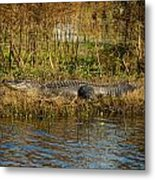 Gator Break Metal Print