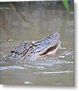 Gator In The Swamp Metal Print