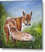 Gazing Fox Metal Print