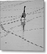Geese Metal Print by All copyrights reserved by Harris Hui
