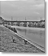 Geese Along The Schuylkill River Metal Print