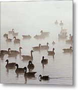 Geese And Ducks In A Placid Lake Metal Print