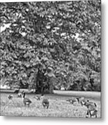 Geese By The River Metal Print