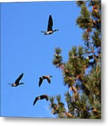 Geese In Tahoe Metal Print by Ernie Claudio