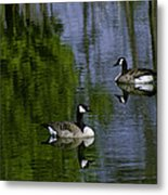 Geese On The Pond Metal Print