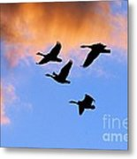 Geese Silhouetted At Sunset - 1 Metal Print