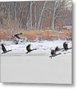 Geese Take Flight Over The Maumee River Metal Print