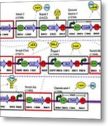 Genetic Circuit Diagram Metal Print by Drew Endymit