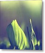 Green Leafes On Forest  Metal Print