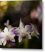 Gentle Light Metal Print