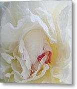 Gently Unfolding Metal Print by Shirley Sirois