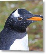 Gentoo Penguin Head Shot Metal Print
