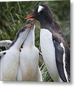 Gentoo Penguin Parent And Two Chicks Metal Print