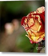 George Burns Rose Metal Print