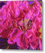 Geranium Pop Metal Print